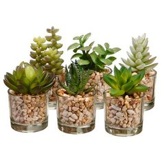 Assorted Succulent Desk Top Plant in Decorative Vase