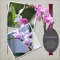 "Orchideen - ""O""-template by wondertalk.de"