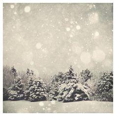 Winter Art Print Snow Globe Fine Art Photography, Snow Bokeh Tree... ($15) ❤ liked on Polyvore featuring home, home decor, wall art, art, snow white snow globe, water snow globes, photography wall art, grey home decor and winter snow globes