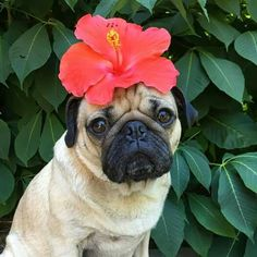 """U deserve flowers every day of the week"" -Doug the pug"
