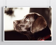 Black Dog – Hipster Posters