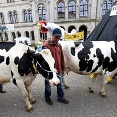 Milk farmers demand permanent measures to regulate the amount of milk produced