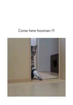 funny cat memes hilarious \ funny cat memes + funny cat memes laughing so hard + funny cat memes hilarious + funny cat memes videos + funny cat memes humor + funny cat memes grumpy + funny cat memes so true + funny cat memes laughing so hard scary Funny Animal Jokes, Funny Cat Memes, Cute Funny Animals, Funny Animal Pictures, Animal Memes, Funny Cute, Cute Cats, Cute Animal Humor, Animal Humour