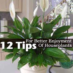 12 Tips For Better Enjoyment Of Houseplants