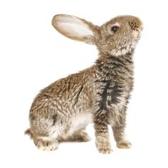 Cadi — «rabbit_4.png» на Яндекс.Фотках ❤ liked on Polyvore featuring animals, fillers, rabbit, bunnies and backgrounds