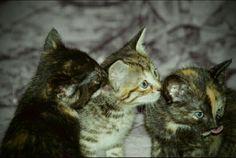 Alles was man braucht ist Liebe und eine Katze! Cats, Animals, Amor, Gatos, Animales, Animaux, Kitty, Cat, Cats And Kittens