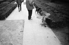 One_of_my_favorite_photos_and_its_a_dog_doing_dog_things._35mm_buyfilmnotmegapixels_film_analogfi... by RuiOliveira7