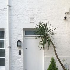 I like the simplicity of this image, it's interesting how everything is very straight and clean-cut looking, and then the palm tree is a contrast from that since it curves into the door. (Pinned by: Christina Pasceri)