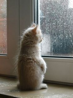 A small kitten looking out a window on a rainy day | fromonesurvivortoanothet | tumblr