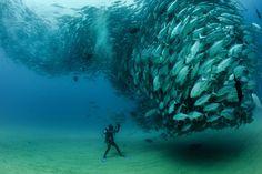 Косяк рыб и отважный дайвер Октавио Абурто