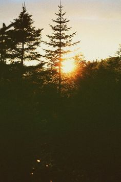 nature, sun, and sunset image