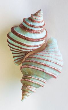 ❥ beautiful seafoam green seashells