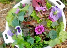 Common Edible Weeds - Rhythm of the Home