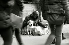 Homeless dogs and owners