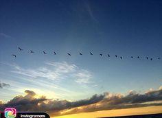 Así damos los buenos días  #comparte @laura_vanderbiest . .  La Fe  VE lo invisible CREE lo increíble y RECIBE lo imposible.  Buen día  #Adicora. . .  #photo #instapic #picoftheday #igers #photooftheday #igersvenezuela #socialmedia #sunrise  #instagood #sunset #falcon #venezuela #paraguana #elnacionalweb #phoneography #pic #share #pfgcrew #sky  #puntofijoguia  #clouds #igersfalcon #Sun