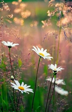 45 Best Ideas For Nature Plants Photography Fields Wild Flowers, Beautiful Flowers, Daisy Flowers, Cactus Flower, Photos Of Flowers, Nice Flower, Anemone Flower, Meadow Flowers, Flower Pictures
