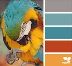 Design Seeds® | for all who ❤ color | macaw hues  There is something about blues, oranges and grays that I love!