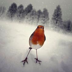 """""""A hard winter"""" by Luis Beltrán on Behance."""