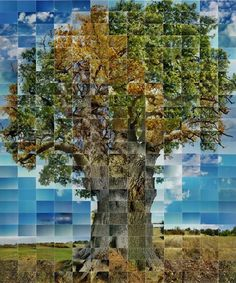 Photographer Noel Myles does collages like nobody else - check out this one of an oak tree!  #photography #art #nature