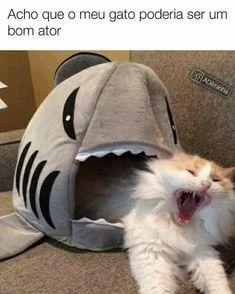 Llevenlo a hollywood Cute Animal Memes, Funny Animal Quotes, Animal Jokes, Cute Funny Animals, Funny Animal Pictures, Cute Baby Animals, Funny Images, Funny Spanish Memes, Funny Cat Memes