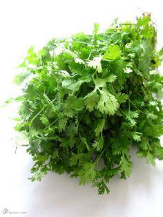 Koriander Parsley, Cilantro, Herbs, Indie, Herb, Medicinal Plants