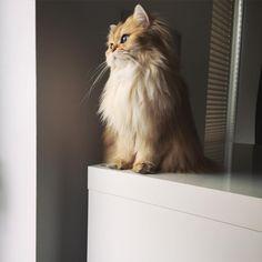 Sanatlı Bi Blog Dünya'nın En Fotojenik Kedisi Smoothie ile Tanışın 14