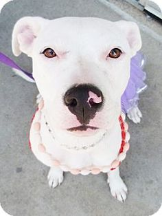 Carly was found by a good Samaritan last winter. When Carly went to get spayed, we found out she was pregnant.  After having 10 beautiful healthy puppies, she is now spayed and is ready to find her new forever home! Carly is a happy girl, always...