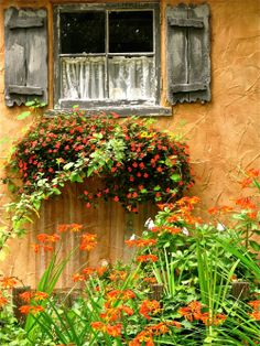 small weathered window with lace curtain, overflowing flower box surrounded by orange plastered walls and wildflowers