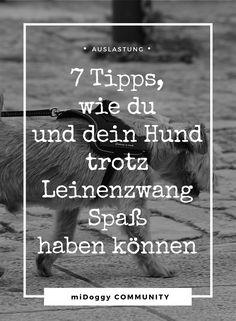 Hund    Leinenzwang    Tipps    Beschäftigung    Gassi