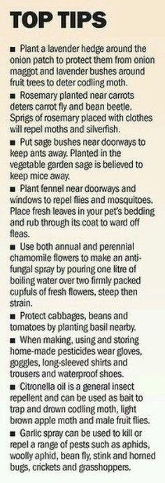 Tips for gardening