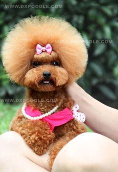 Different! Super cute poodle style!