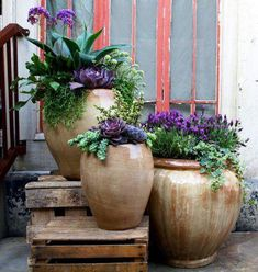 Some great ceramic pots with mixed plantings, including succulents - with a touch of rustic wood
