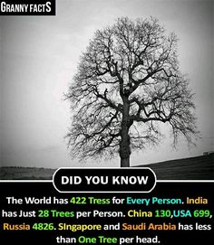 Trees per person Save tree Save nature save future Wow Facts, Real Facts, Wtf Fun Facts, True Facts, Fun Facts About Life, Facts About Humans, Interesting Facts About World, General Knowledge Facts, Knowledge Quotes