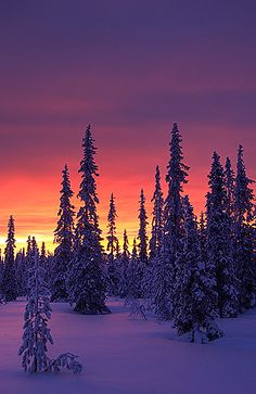 Sunrise at Vuotso, Finland