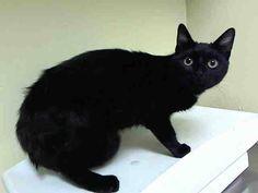 Black dress 6 9 months kitten