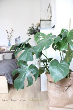 Urban Jungle Bloggers: a cosy & green bedroom by @ilariafatone 2015 Trend : Jungle Style www.houseandleisure.co.za