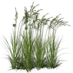 wetland plants png - Google Search