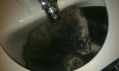 My little cat.... xD #cat #gato #animal #love #funny
