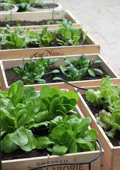 Crate garden. This idea is great for people who don't have a lot of outdoor space to start a garden.