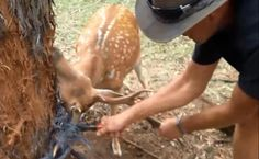 Are Wild Animals Really Grateful When People Rescue Them?