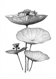 Sound Flora by Keita Akiyama.