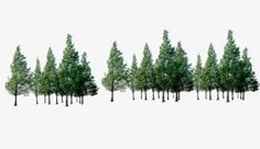 Trees, A Row Of Trees, Forest PNG and PSD