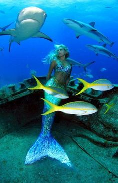 Hannah mermaid swimming with black tip reef sharks deep, Nassau, Bahamas with Stuart Cove Dives. real, no photoshop. Sharks are amazing majestic creatures deserving of our respect and protection. END SHARK FINNING! Mermaid Fairy, Mermaid Tale, Fantasy Mermaids, Mermaids And Mermen, Mythical Creatures, Sea Creatures, Real Life Mermaids, Mermaid Pictures, Merfolk