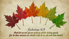 Galatians 6:9 ~ And let us not grow weary while doing good, for in due season we shall reap if we do not lose heart.