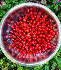Got Sour Cherries? Mine are ready! For me that means cherry preserves, cherry pit vodka, cherry cider and cherry mole.