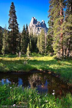 Hayden Forest, Rocky Mountain National Park, Colorado, USA