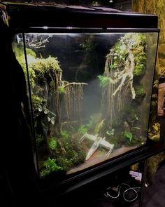 Dit terrarium is een perfecte omgeving om jedi-hagedissen te kweken.  #StarWars #Jedi #Dagobah #Yoda #movies #scifi #terrarium