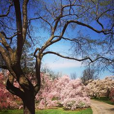 Magnolia Way (photo by Rafael Moricete Jr.)
