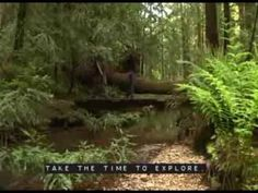 Big Basin Redwoods State Park official web site. Use other sites for tent cabin rentals and camping gear rentals.