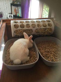 POPSUGAR Rabbit litter tray and hay feeder diy ikea Rabbit Litter Box, Rabbit Pen, Rabbit Toys, Pet Rabbit, Diy Bunny Cage, Diy Bunny Toys, Bunny Cages, Rabbit Feeder, Hay Feeder